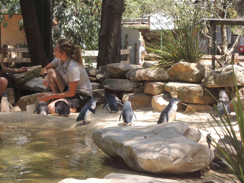 Tučniaky Austrálie